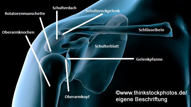 Die Schulter – Unglaublich beweglich, aber auch anfällig ...
